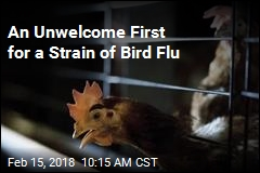 Bird Flu Strain Avoided Humans—Until Now