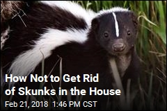 Guy Burns His House Down Trying to Get Rid of Skunks