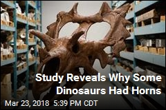 Study Reveals Why Some Dinosaurs Had Horns