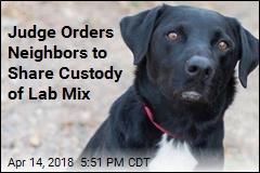 Neighbors Get Joint Custody of Dog in Odd Legal Fight