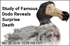 World's Most Famous Dodo Met Surprise Demise
