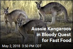 Aussie Kangaroos in Bloody Quest for Fast Food