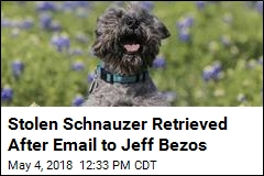 Stolen Schnauzer Retrieved After Email to Jeff Bezos