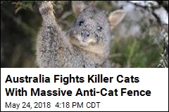 Australia Fights Killer Cats With Massive Anti-Cat Fence