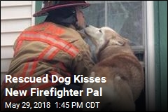 Rescued Dog Kisses New Firefighter Pal