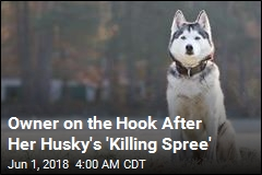 Owner Charged After Husky Kills Slew of Animals