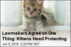 Lawmakers Want to End Research That Kills Kittens