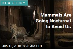 Mammals Are Going Nocturnal to Avoid Us