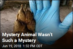 Mystery Animal Wasn't Such a Mystery