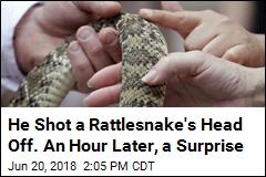 He Shot a Rattlesnake's Head Off. An Hour Later, a Surprise