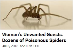 Woman's Unwanted Guests: Dozens of Poisonous Spiders