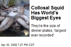 Collosal Squid Has World's Biggest Eyes