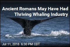 Ancient Romans May Have Had Thriving Whaling Industry