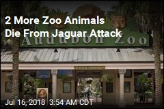 2 More Zoo Animals Die From Jaguar Attack