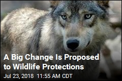 After 45 Years, Endangered Species Act May Be in Trouble