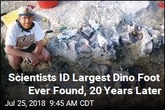 Deserving of Its Name: 150M-Year-Old 'Bigfoot'