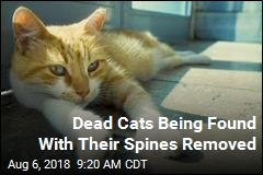 Cats Being Killed in Macabre Way in One Washington County