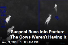 Suspect Runs Into Pasture. The Cows Weren't Having It