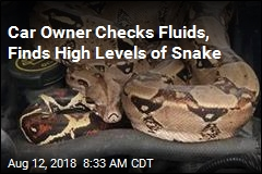Car Owner Checks Fluids, Finds High Levels of Snake