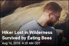 Lost Mt. St. Helens Hiker Ate Berries, Bees to Survive
