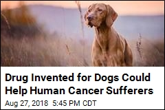 Canine Cancer Drug Could Offer Hope to Humans