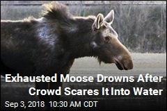 Moose Threatened by Gawking Crowd Retreats to Lake, Drowns