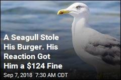 A Seagull Stole His Burger. His Reaction Got Him a $124 Fine