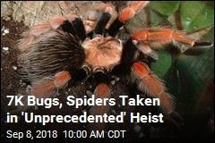7K Bugs, Spiders Taken in 'Unprecedented' Heist