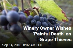 Winery Owner Wishes 'Painful Death' on Grape Thieves