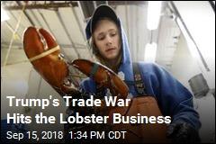Lobster Biz Sees Layoffs, Low Prices Amid Trade War
