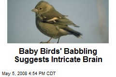 Baby Birds' Babbling Suggests Intricate Brain