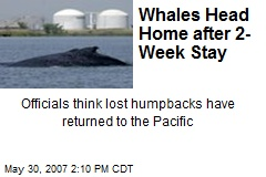 Whales Head Home after 2-Week Stay