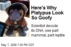 Here's Why Platypus Look So Goofy