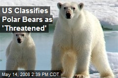 US Classifies Polar Bears as 'Threatened'