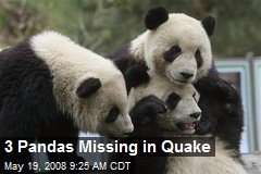 3 Pandas Missing in Quake
