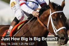 Just How Big is Big Brown?