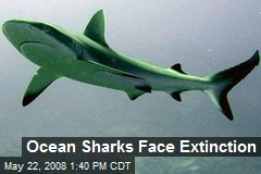 Ocean Sharks Face Extinction