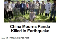 China Mourns Panda Killed in Earthquake