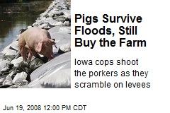 Pigs Survive Floods, Still Buy the Farm