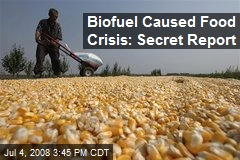 Biofuel Caused Food Crisis: Secret Report