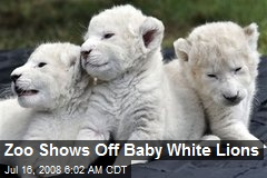 Zoo Shows Off Baby White Lions