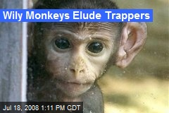 Wily Monkeys Elude Trappers