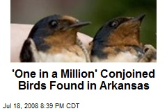 'One in a Million' Conjoined Birds Found in Arkansas