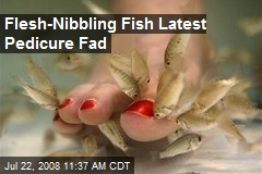 Flesh-Nibbling Fish Latest Pedicure Fad
