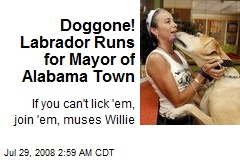 Doggone! Labrador Runs for Mayor of Alabama Town