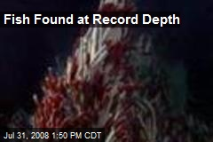 Fish Found at Record Depth