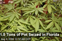1.5 Tons of Pot Seized in Florida