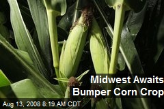 Midwest Awaits Bumper Corn Crop