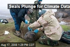 Seals Plunge for Climate Data
