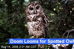 Doom Looms for Spotted Owl